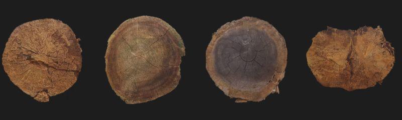 Textura de tronco de arbol cortado para modelados 3D en Blender