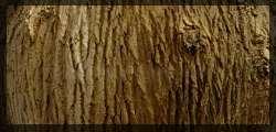 texturas de corteza de arbol